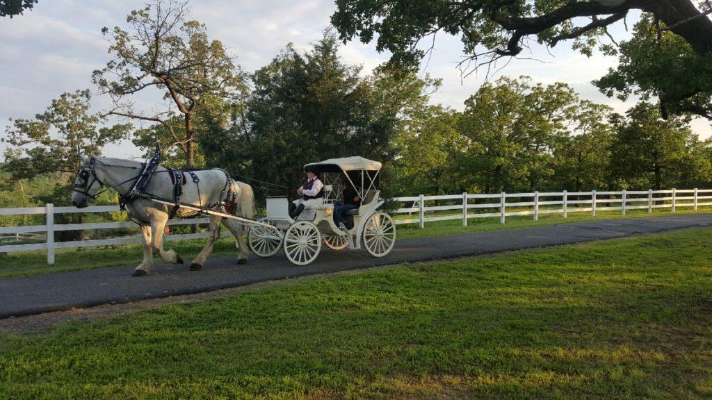 Romantic Ava K's Ranch Rides (3)